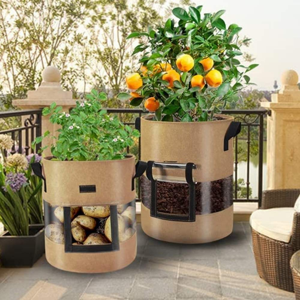 best growing potatoes planting pot